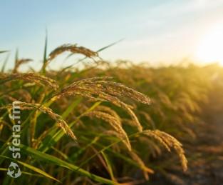 Челябинская область просит Минсельхоз России увеличить господдержку агрострахования