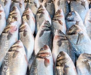 Государство передумало субсидировать перевозку рыбы