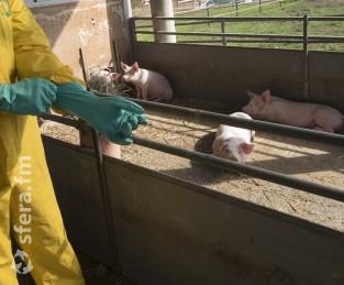 Перу и Бразилия запретили путешественникам ввозить в страну продукцию из свинины