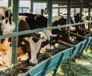 Вторая очередь крупного молочного предприятия была запущена в Рязанской области