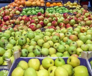 Прогноз: урожай яблок в России достигнет 1,5 млн тонн