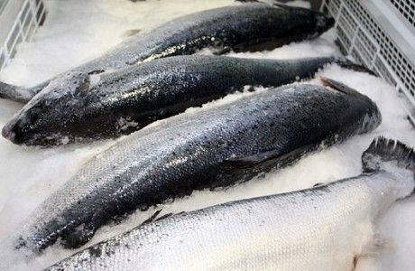50 тонн мороженой рыбы изъяли в Новосибирске
