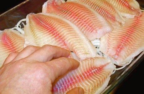 Норвежец и финн хотели провезти в Петербург порядка 90 кг рыбы