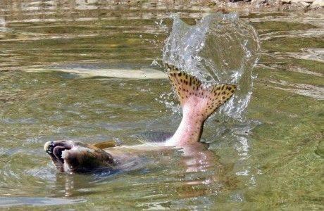 Массовая миграция рыбы началась на Камчатке